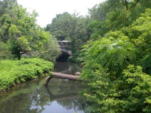 Bronx_River_northern_NYBG_jeh